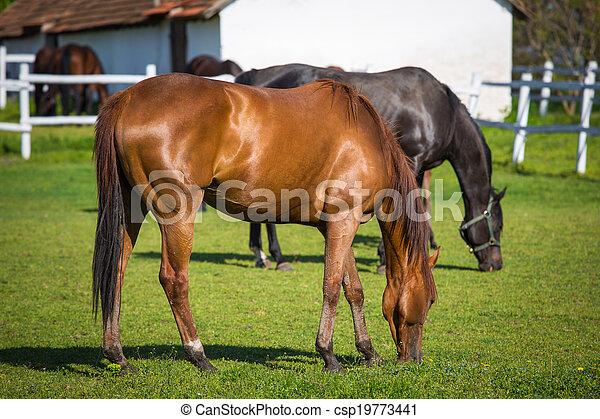 horses, выгон - csp19773441