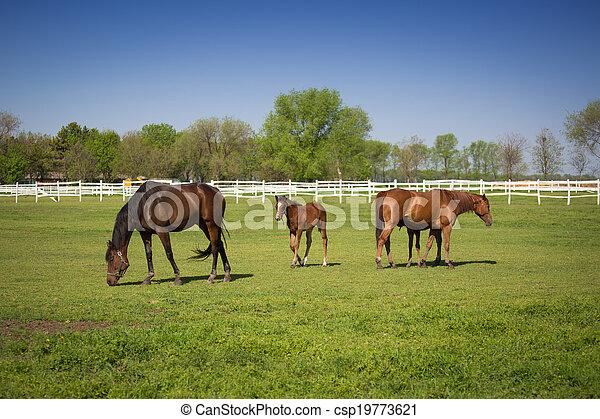 horses, выгон - csp19773621