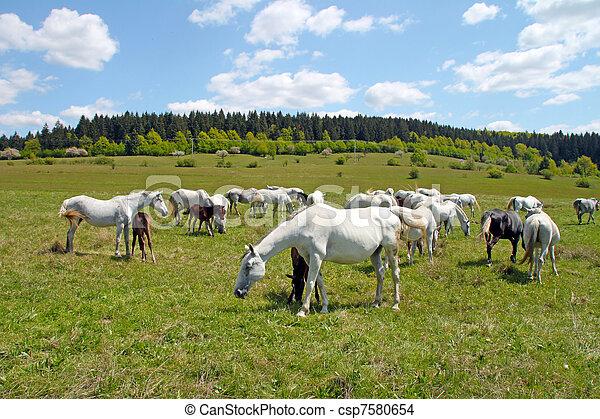 horses, выгон - csp7580654