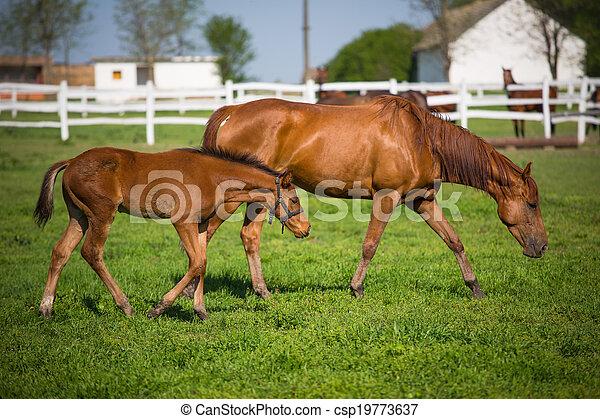 horses, выгон - csp19773637