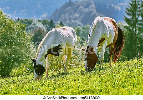 horses, выгон - csp51122639