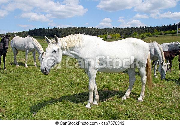 horses, выгон - csp7570343