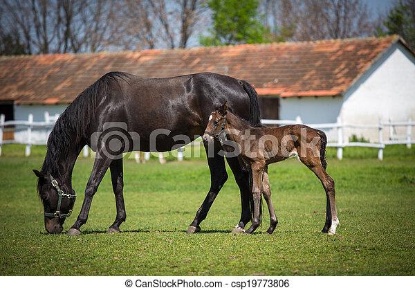 horses, выгон - csp19773806