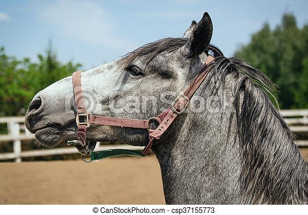 horses, ферма - csp37155773