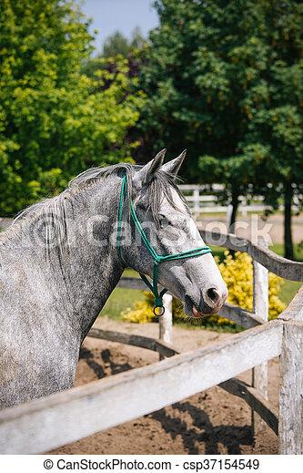 horses, ферма - csp37154549