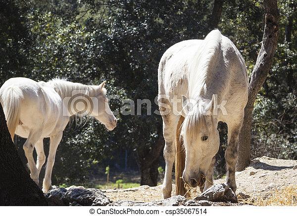 horses, mallorca, выгон - csp35067514