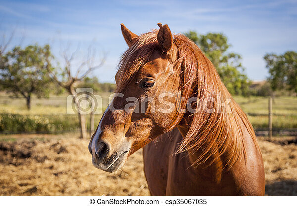 horses, mallorca, выгон - csp35067035