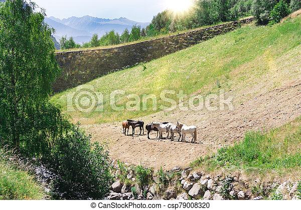 horses, pasture. - csp79008320