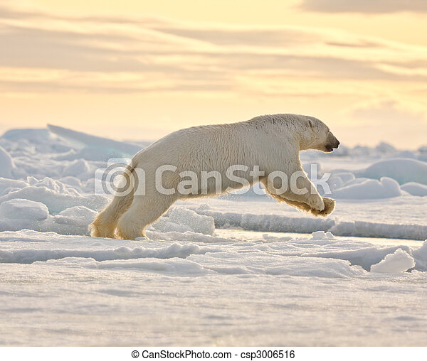leaping, медведь, полярный, снег - csp3006516