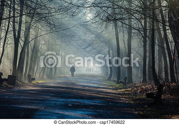 poland., туман, сильный, дорога, sunbeams, лес - csp17459622