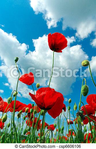 poppys, небо - csp6606106