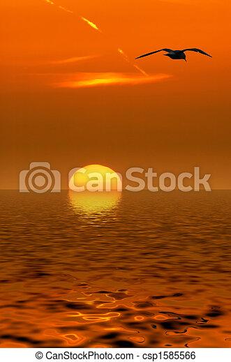 seagulls, закат солнца - csp1585566